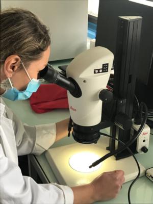 Une loupe trinoculaire à Biogéosciences