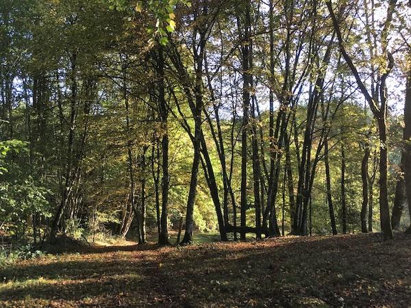 Projet de Zone Atelier Morvan (ZAMo), un dispositif de recherche sur le socio-écosystème forestier